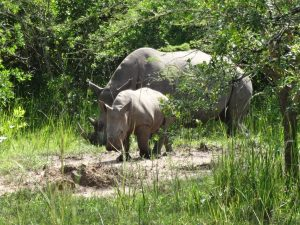 15 Days Uganda Wildlife Safari: Murchison falls, Kibale forest, Lake Bunyonyi & Lake Mburo