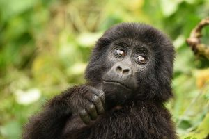 9 Days Uganda Wildlife & Gorilla Tour