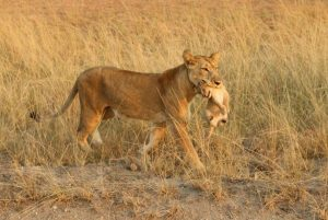 5 Days Queen Elizabeth & Kibale Wildlife Tour.