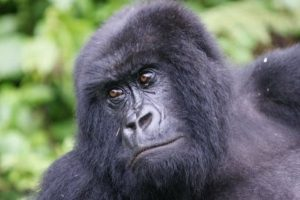 8 Days Rwanda Gorillas & Wildlife Safari Encounter