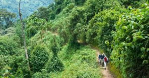 Hikes & Nature Walks nyungwe forest national park