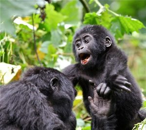 5 Days Rwanda Gorillas &Wildlife Safari