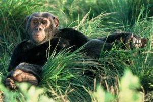 10 Days Uganda Gorilla & Classic Wildlife Safari