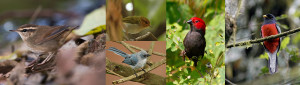 birds-bwindi-forest-np