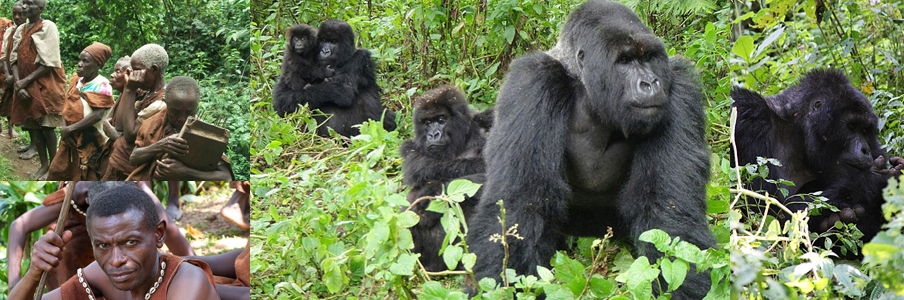bwindi-gorilla-trekking-and-batwa-encounter