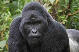 bwindi impenetrable forest national park uganda