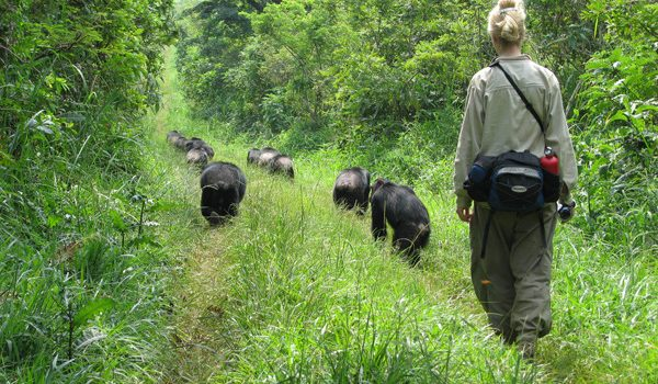 THE ULTIMATE UGANDA SAFARI EXPERIENCES