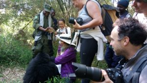Gorilla safari tours