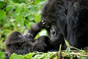 4 Days Bwindi Gorilla Trek & Lake Mburo Wildlife Tour