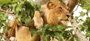 4 Days Queen Elizabeth Wildlife Safari
