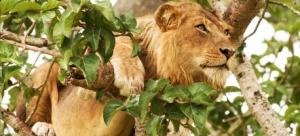 4 Days Queen Elizabeth Wildlife Safari