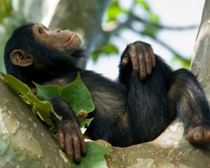 16 Days Uganda Wildlife Safari Tour