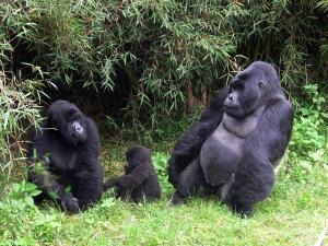 13 Days Uganda Rwanda Gorilla Safari