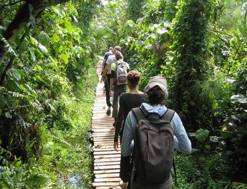 1 Day Rwenzori Hiking Safari Uganda Safari / 1 Days Uganda Hiking Safari to Mountain Rwenzori National Park-Uganda Safari News