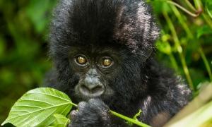 7 Days Uganda Primate Safari Tour