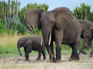 Wildlife in Virunga national park