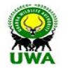 Gorilla safaris UWA