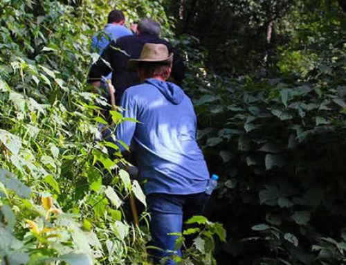 Explore The Other Side of Bwindi Without Tracking Gorillas!- Uganda Safari News