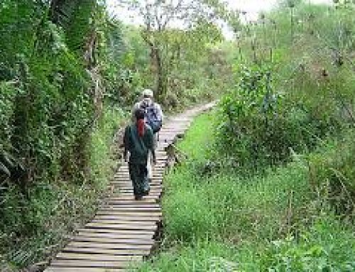5 Days Rwenzori Hiking Safari Uganda Tour / 5 Days Uganda Mountaineering Safari to Rwenzori National Park -Uganda Safari News