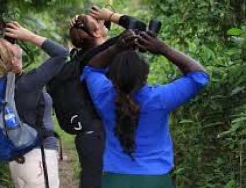 3 Days Semuliki Birding Safari Uganda Tour / 3 Days Uganda Birding Safari to Semuliki National Park-Uganda Safari News